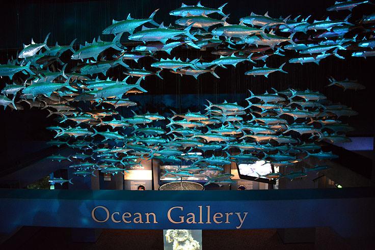 A Display At N C Aquarium Fort Fisher