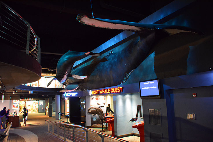 Lifesize Whales At The N C Aquarium Fort Fisher